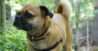 Puggle in Forest Thumbnail