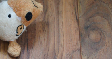 Dog toy on hardwood floor thumbnail